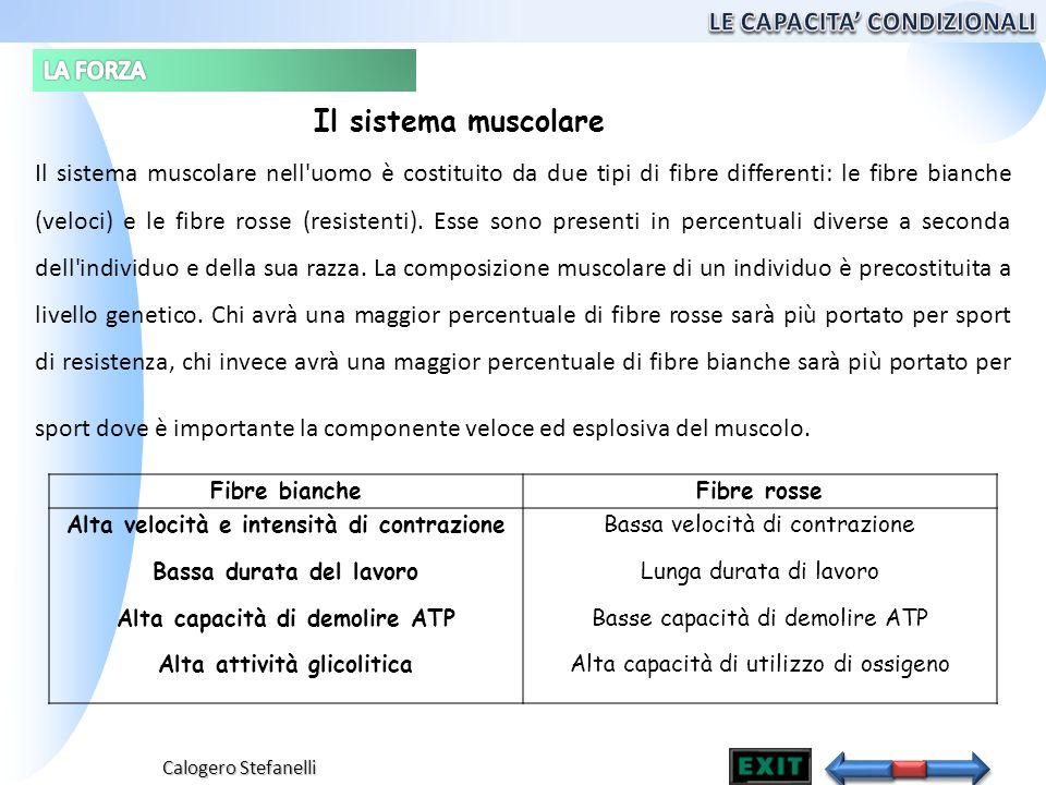 Calogero Stefanelli Il sistema muscolare nell'uomo è costituito da due tipi di fibre differenti: le fibre bianche (veloci) e le fibre rosse (resistent