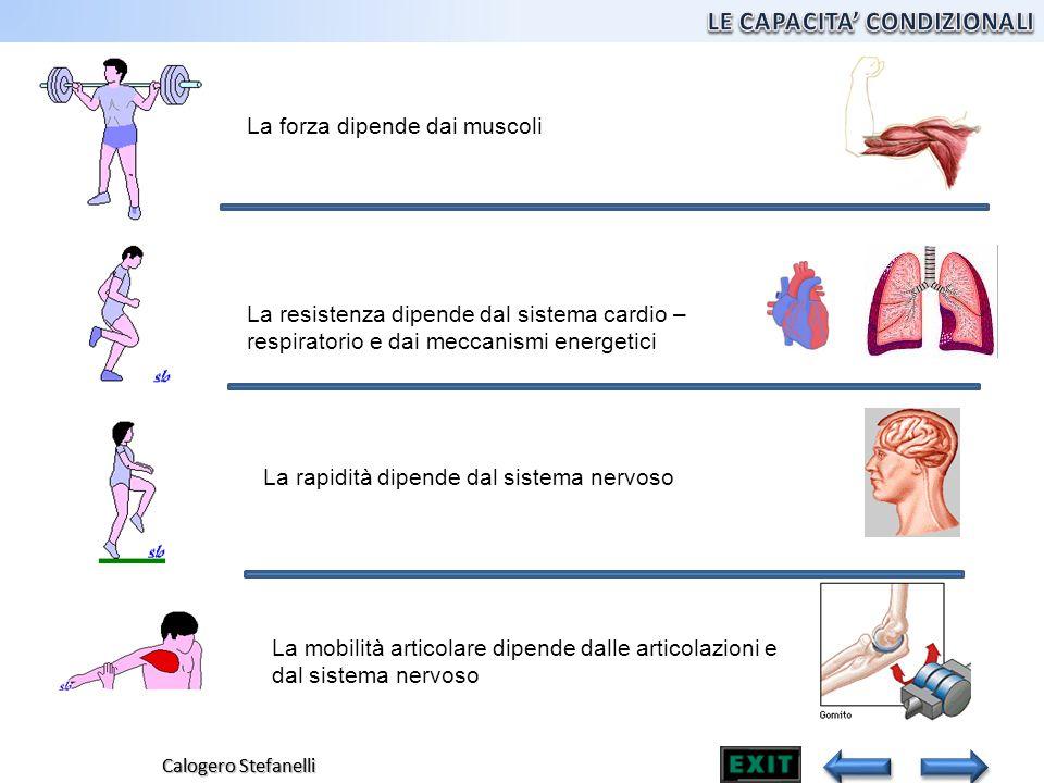 Calogero Stefanelli La forza dipende dai muscoli La resistenza dipende dal sistema cardio – respiratorio e dai meccanismi energetici La rapidità dipen