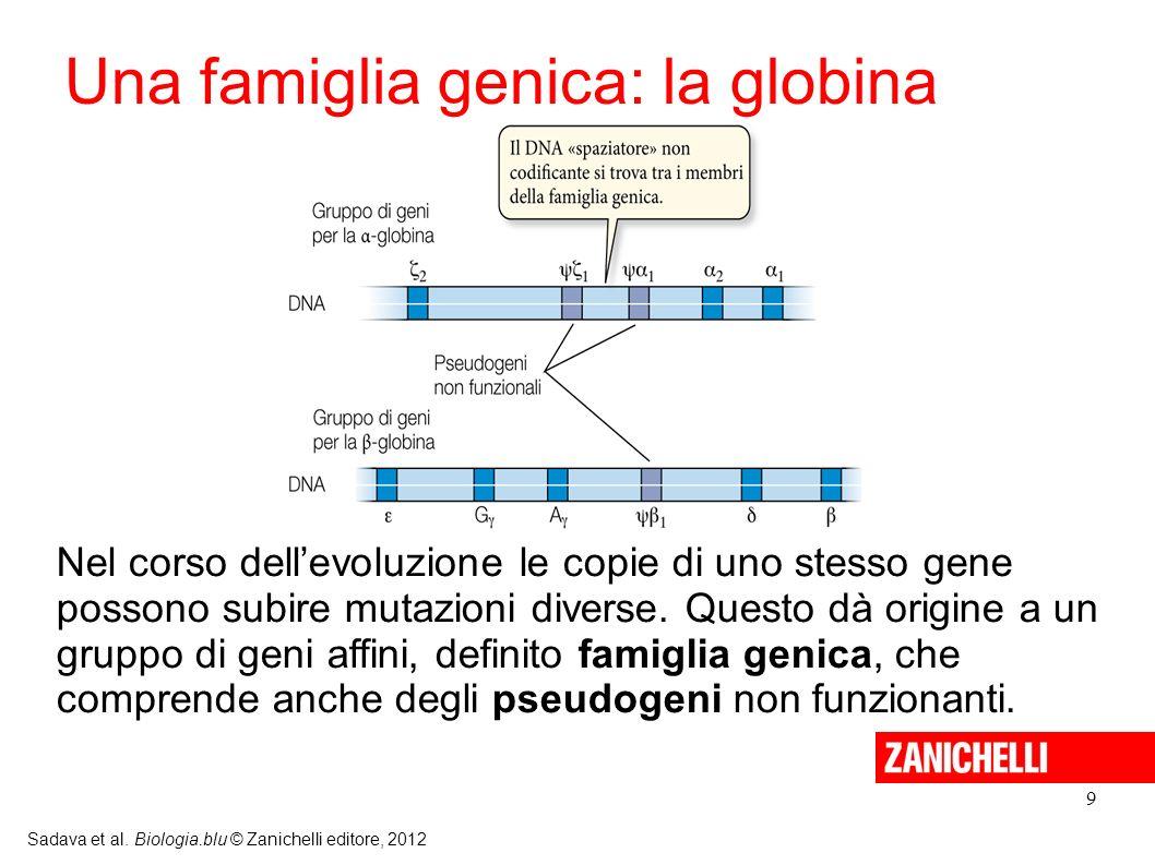 10 Lespressione genica può essere regolata in diversi momenti (prima, durante e dopo la trascrizione e la traduzione) e in ambienti cellulari differenti (nel nucleo o nel citoplasma).