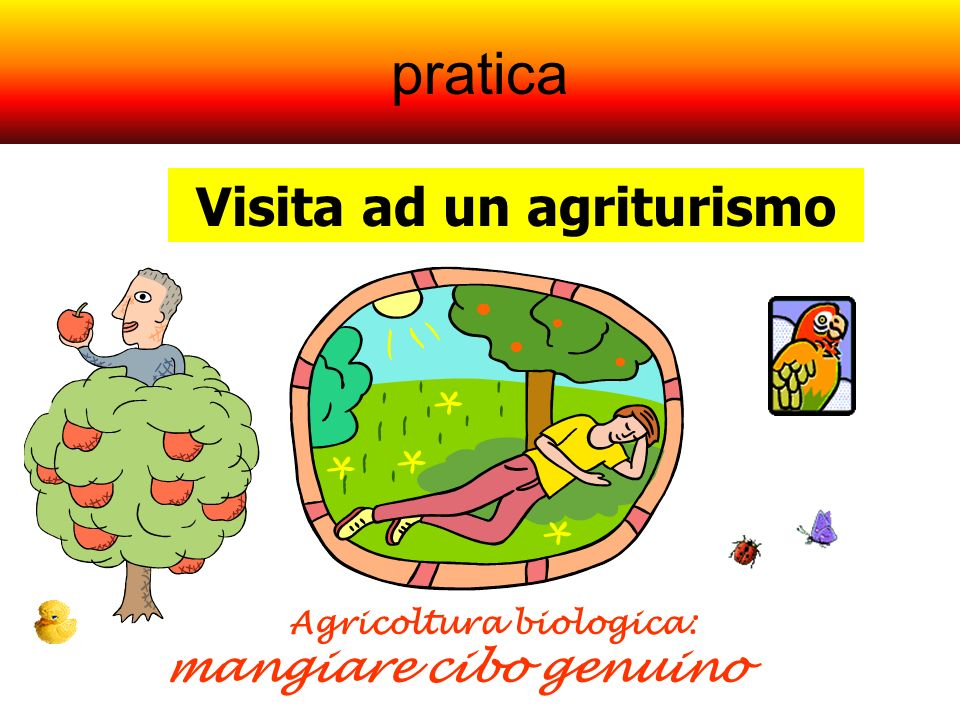 pratica Visita ad un agriturismo Agricoltura biologica: mangiare cibo genuino