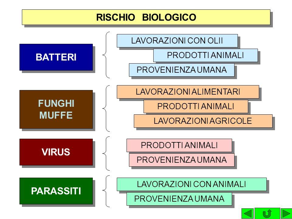 RischioDanno ORGANIZZAZIONE DEL LAVORO ORGANIZZAZIONE DEL LAVORO INFORTUNI BIOLOGICO FISICO CHIMICO MALATTIA ASPECIFICA MALATTIA ASPECIFICA MALATTIA P