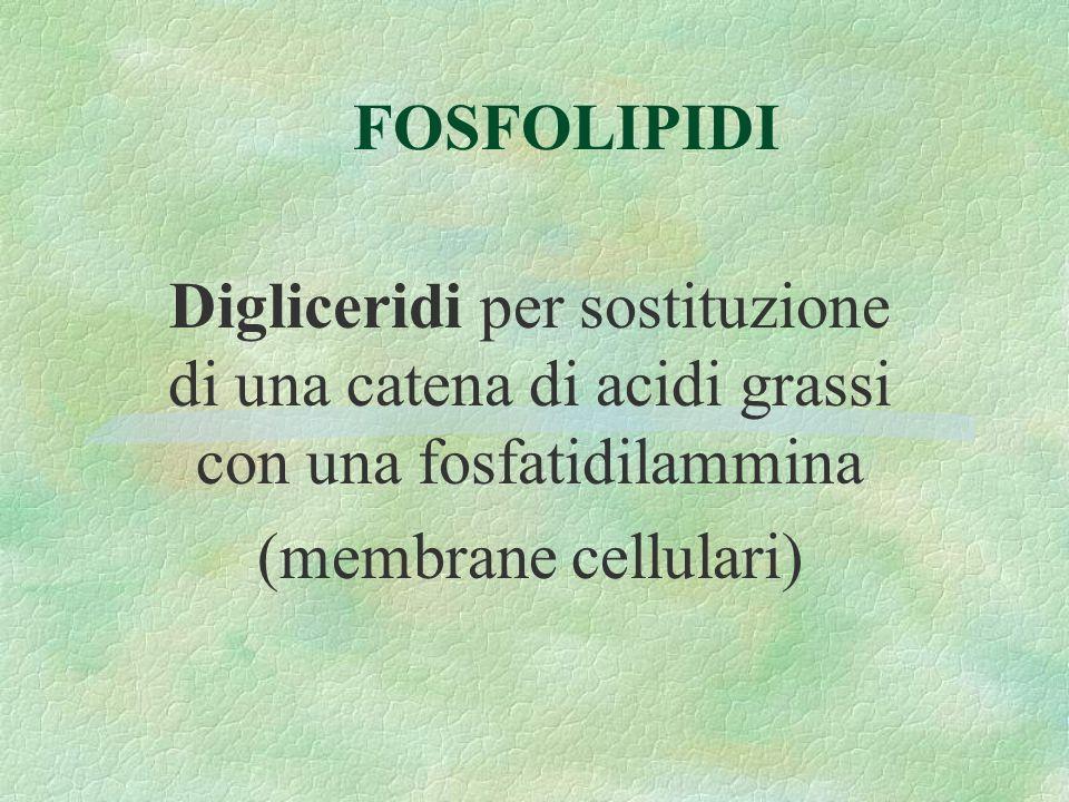 FOSFOLIPIDI Digliceridi per sostituzione di una catena di acidi grassi con una fosfatidilammina (membrane cellulari)