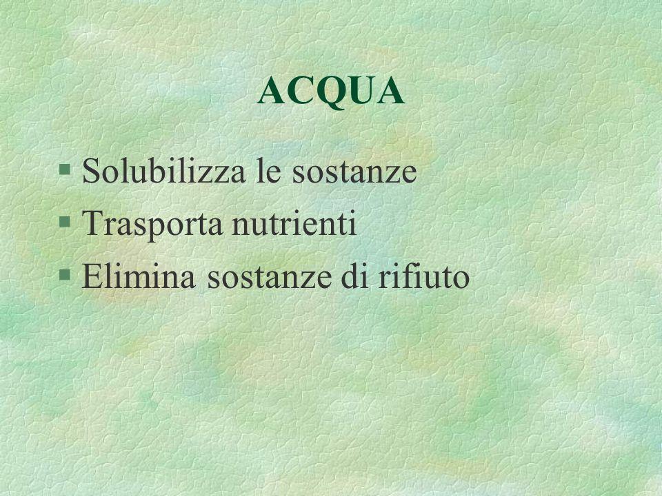 ACQUA §Solubilizza le sostanze §Trasporta nutrienti §Elimina sostanze di rifiuto