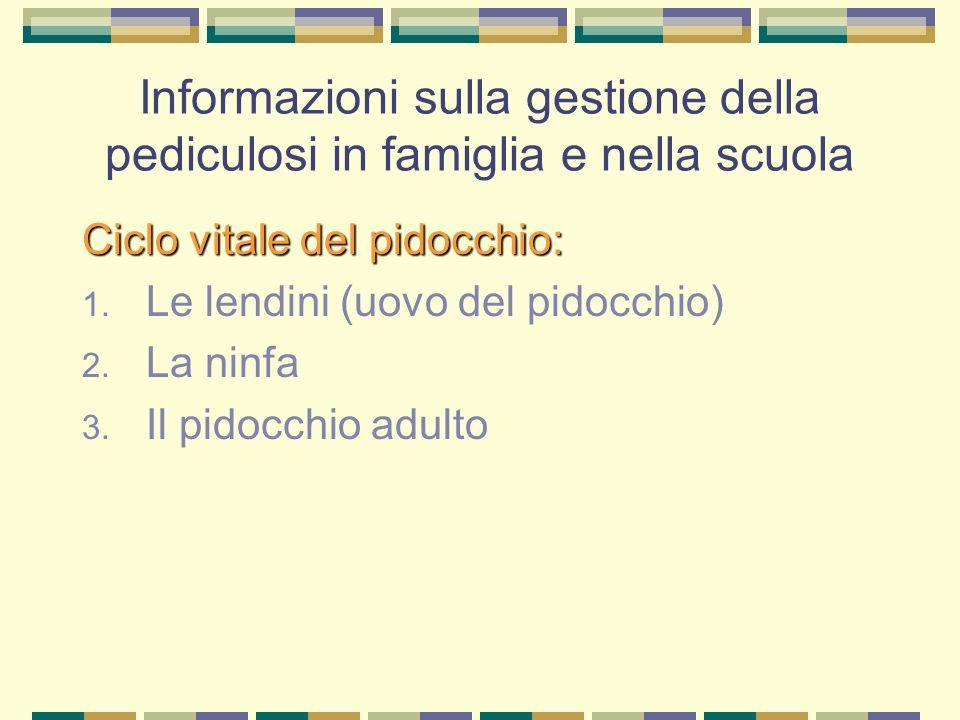 Informazioni sulla gestione della pediculosi in famiglia e nella scuola Ciclo vitale del pidocchio: 1. Le lendini (uovo del pidocchio) 2. La ninfa 3.