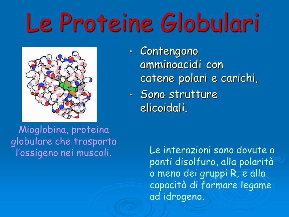 Le Proteine Globulari Contengono amminoacidi con catene polari e carichi, Contengono amminoacidi con catene polari e carichi, Sono strutture elicoidal
