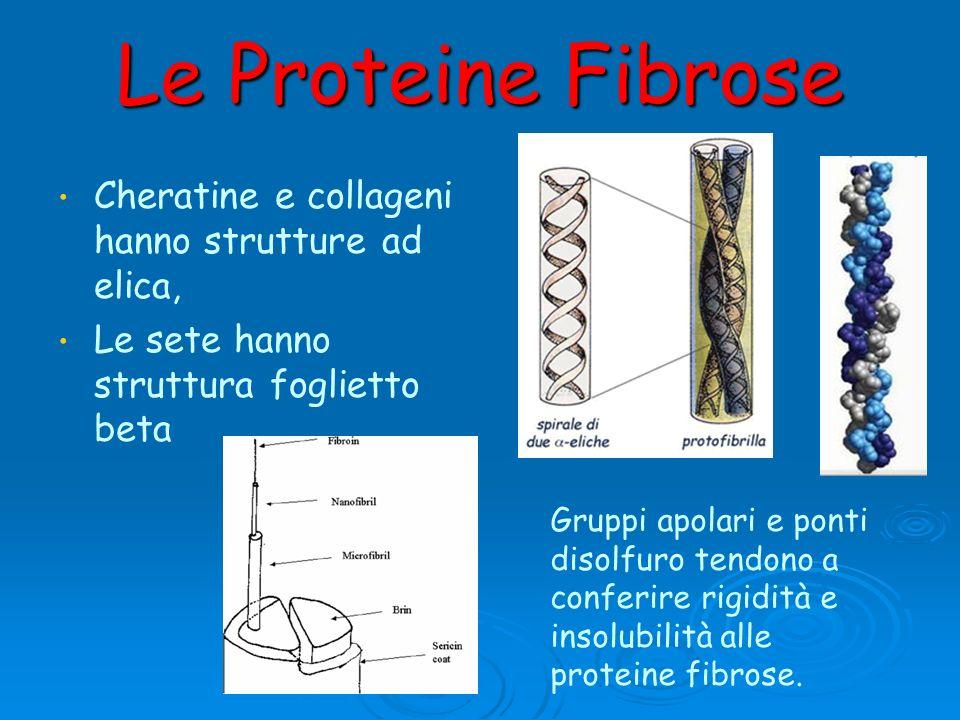 Le Proteine Fibrose Cheratine e collageni hanno strutture ad elica, Le sete hanno struttura foglietto beta Gruppi apolari e ponti disolfuro tendono a