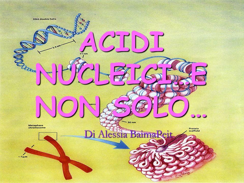 ACIDI NUCLEICI Gli acidi nucleici sono acidi presenti nel nucleo della cellula o comunque lì prodotti.