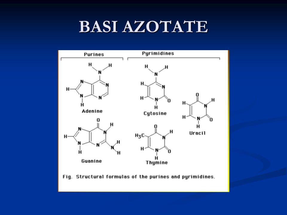 BASI AZOTATE