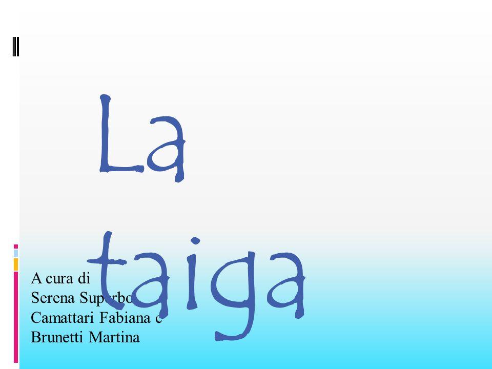 Sitografia Siti Internet: - http://it.wikipedia.org/wiki/Taiga#Descrizione http://it.wikipedia.org/wiki/Taiga#Descrizione - http://landsofshadow.medialighieri.it /griot/biodivesita/taiga.htm http://landsofshadow.medialighieri.it /griot/biodivesita/taiga.htm - http://digilander.libero.it/MeteomondoForli/pagine/pagine_secondarie /meteo_mondo/08.htm http://digilander.libero.it/MeteomondoForli/pagine/pagine_secondarie /meteo_mondo/08.htm - http://www.direzionedidatticafarasabina.it/griska/taiga.htm http://www.direzionedidatticafarasabina.it/griska/taiga.htm - http://www.galad.it/ADR/SSS/Geo3/Geo_3.htm http://www.galad.it/ADR/SSS/Geo3/Geo_3.htm - http://claudiobaglioni.forumcommunity.net/?t=47136443 http://claudiobaglioni.forumcommunity.net/?t=47136443