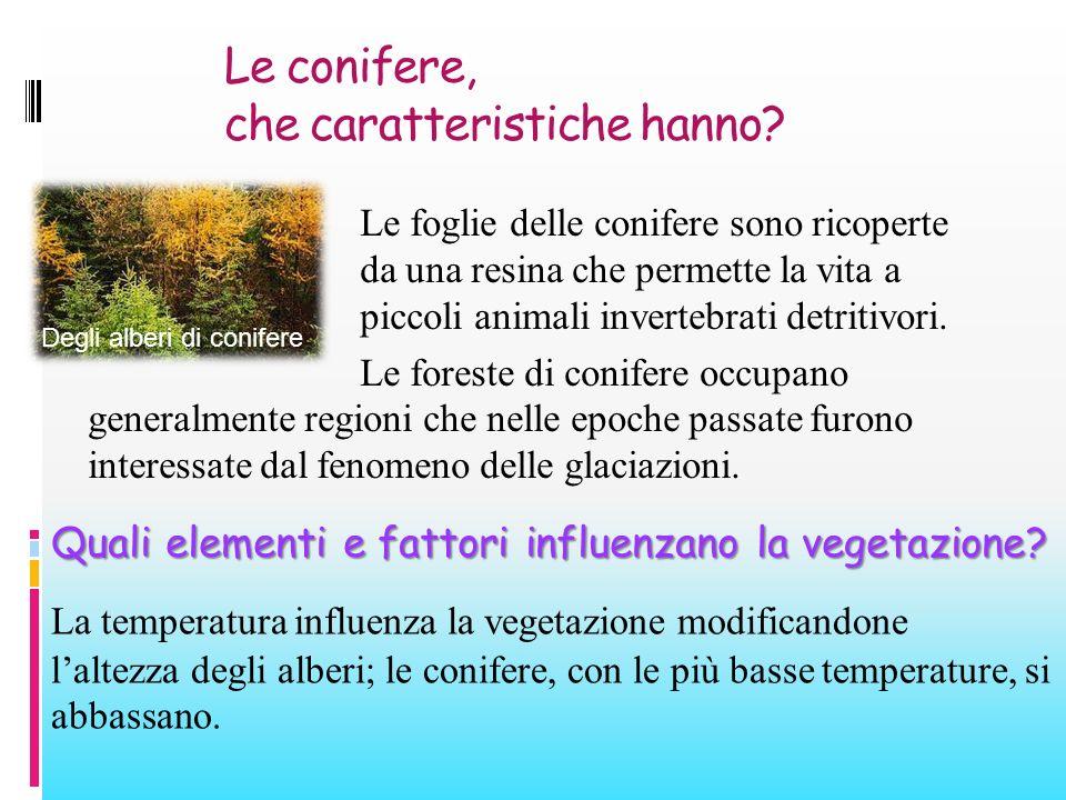 Le conifere, che caratteristiche hanno? Le foglie delle conifere sono ricoperte da una resina che permette la vita a piccoli animali invertebrati detr