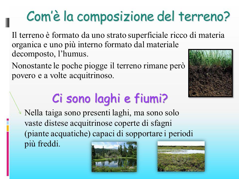 Comè la composizione del terreno? Il terreno è formato da uno strato superficiale ricco di materia organica e uno più interno formato dal materiale de
