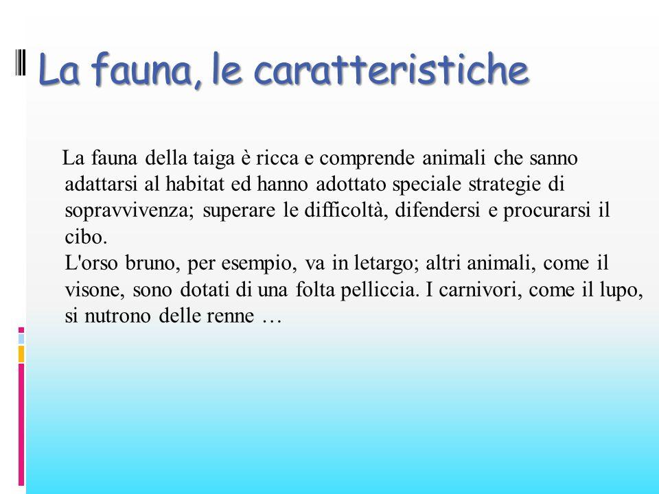 La fauna, le caratteristiche La fauna della taiga è ricca e comprende animali che sanno adattarsi al habitat ed hanno adottato speciale strategie di s