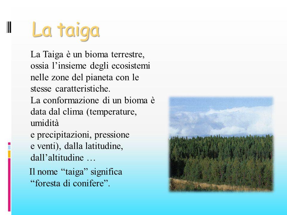 La taiga La Taiga è un bioma terrestre, ossia linsieme degli ecosistemi nelle zone del pianeta con le stesse caratteristiche. La conformazione di un b