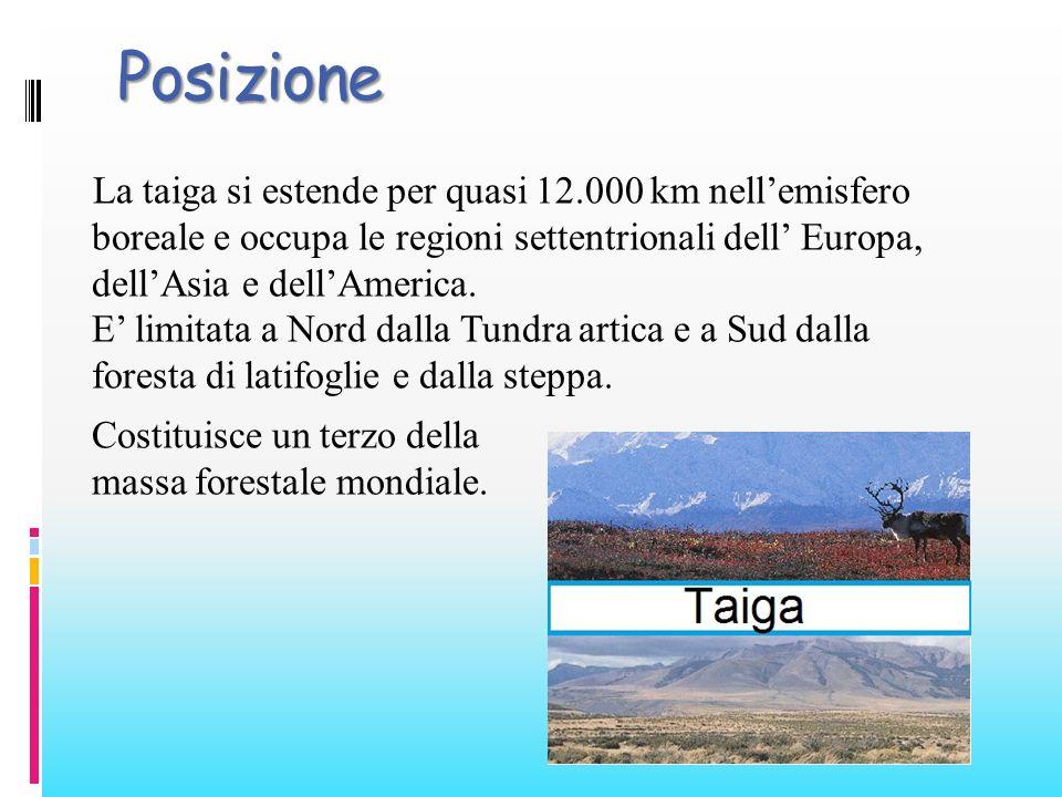 Posizione La taiga si estende per quasi 12.000 km nellemisfero boreale e occupa le regioni settentrionali dell Europa, dellAsia e dellAmerica. E limit