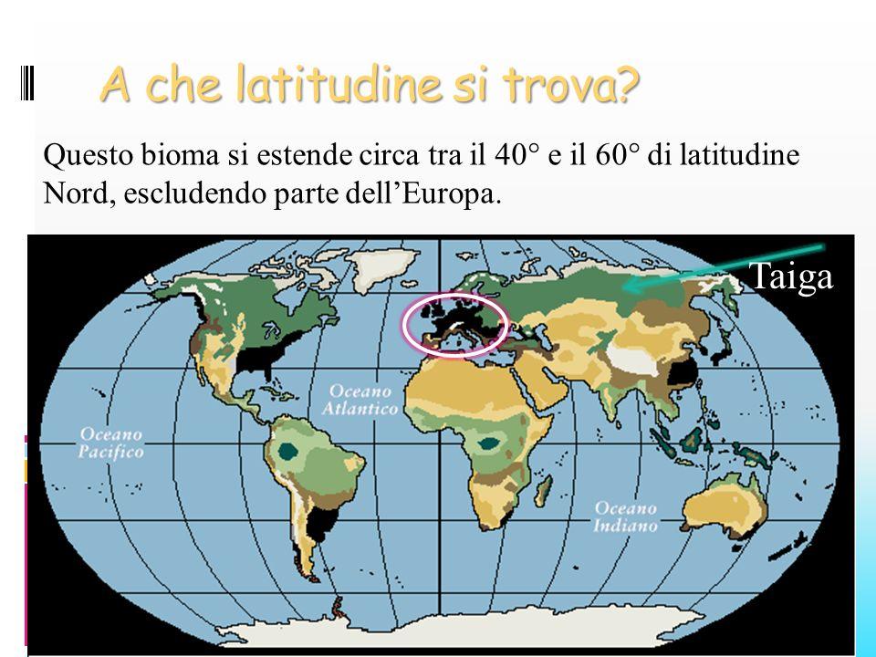 A che latitudine si trova? Questo bioma si estende circa tra il 40° e il 60° di latitudine Nord, escludendo parte dellEuropa. Taiga