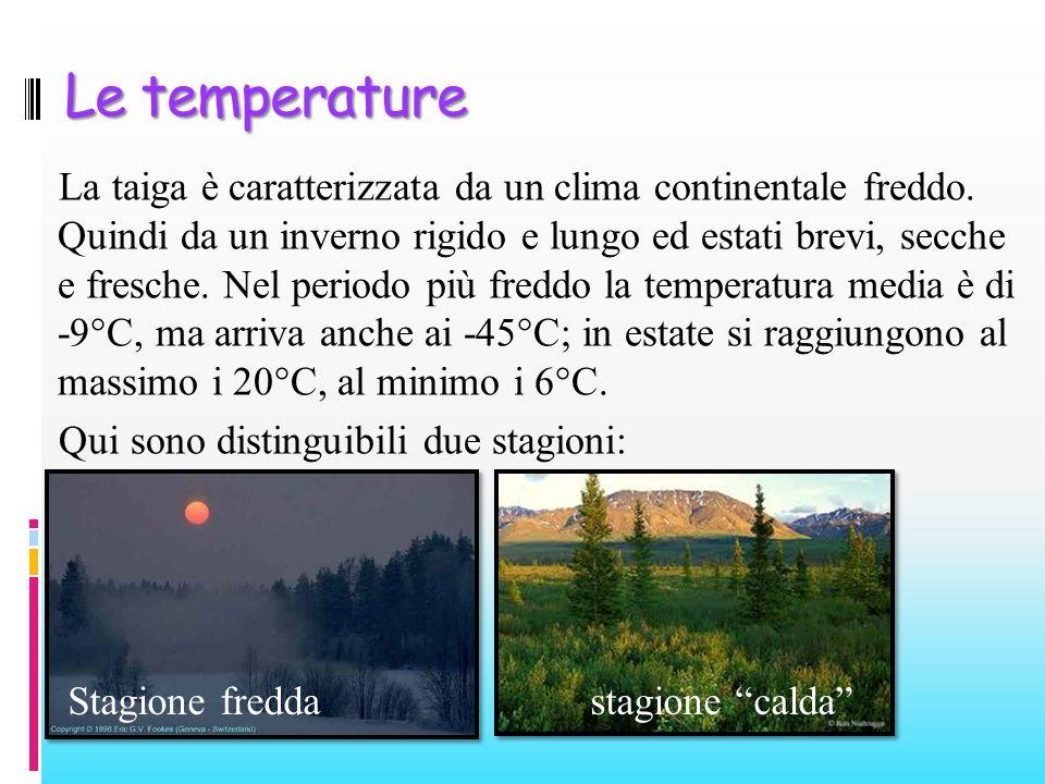 Le temperature La taiga è caratterizzata da un clima continentale freddo. Quindi da un inverno rigido e lungo ed estati brevi, secche e fresche. Nel p