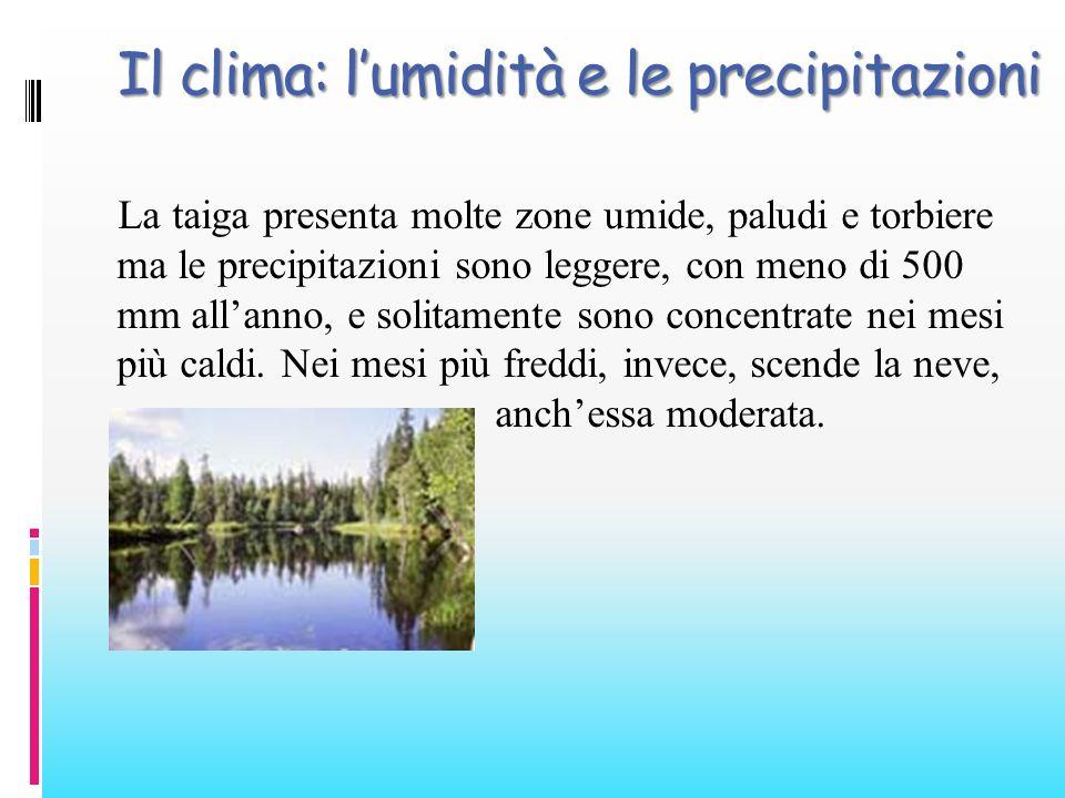 Il clima: lumidità e le precipitazioni La taiga presenta molte zone umide, paludi e torbiere ma le precipitazioni sono leggere, con meno di 500 mm all