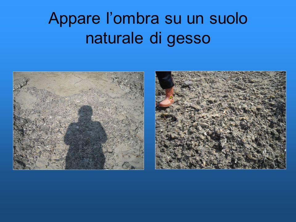Appare lombra su un suolo naturale di gesso