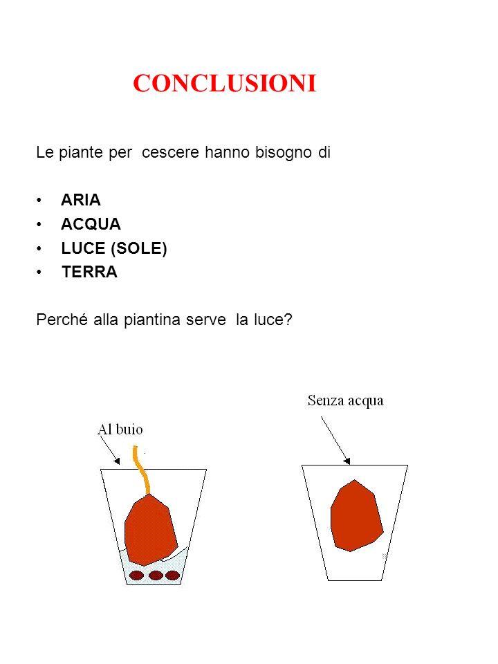 CONCLUSIONI Le piante per cescere hanno bisogno di ARIA ACQUA LUCE (SOLE) TERRA Perché alla piantina serve la luce?