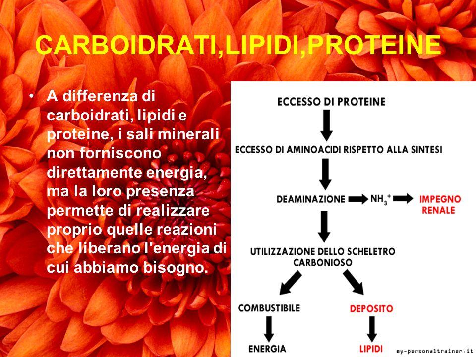 CARBOIDRATI,LIPIDI,PROTEINE A differenza di carboidrati, lipidi e proteine, i sali minerali non forniscono direttamente energia, ma la loro presenza p