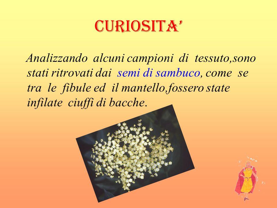 CURIOSITA Analizzando alcuni campioni di tessuto,sono stati ritrovati dai semi di sambuco, come se tra le fibule ed il mantello,fossero state infilate