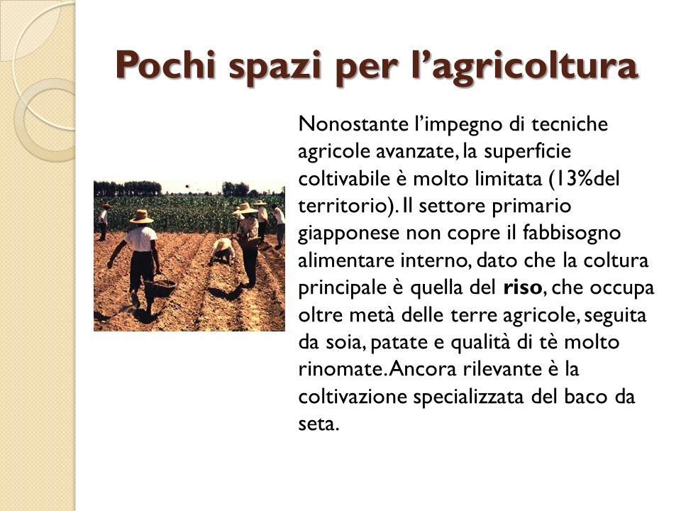 Pochi spazi per lagricoltura Nonostante limpegno di tecniche agricole avanzate, la superficie coltivabile è molto limitata (13%del territorio). Il set