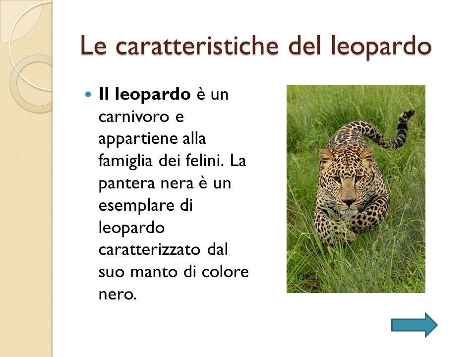 Le caratteristiche dellantilope La sua caratteristica peculiare è che i maschi hanno 4 corna mentre le femmine non ne hanno.