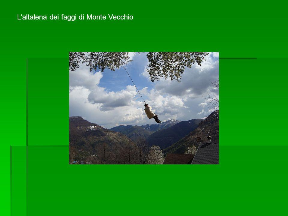 Laltalena dei faggi di Monte Vecchio