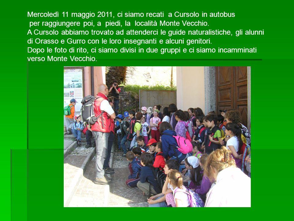 Mercoledì 11 maggio 2011, ci siamo recati a Cursolo in autobus per raggiungere poi, a piedi, la località Monte Vecchio. A Cursolo abbiamo trovato ad a