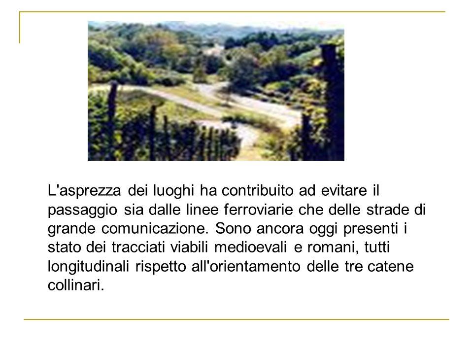 ECONOMIA Famose per la produzione vinicola, le colline delle Langhe sono contrassegnate dal vitigno Moscato.