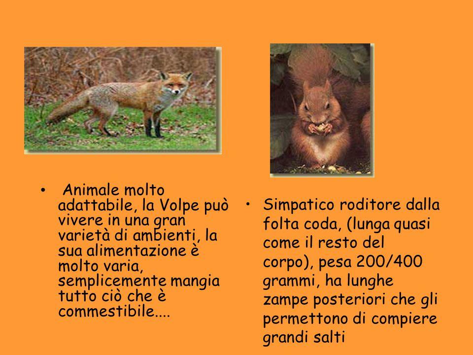 Prodotto da Stefano F. Jusef O. Matteo F. Mohamed F. Sito del parco: http://www.parcovalgrande.it/