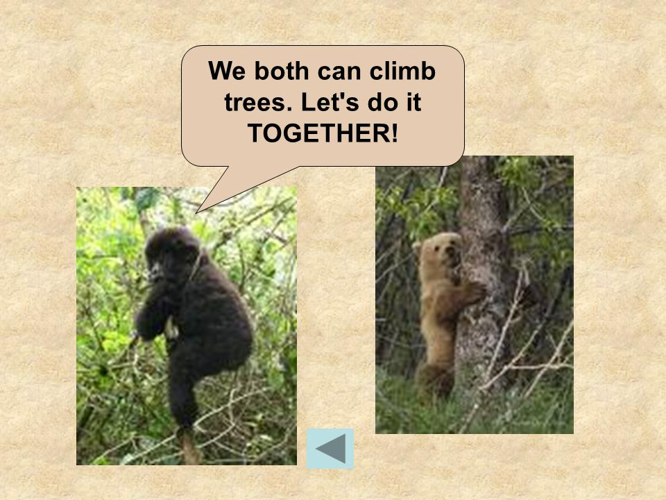 We both can climb trees. Let s do it TOGETHER!