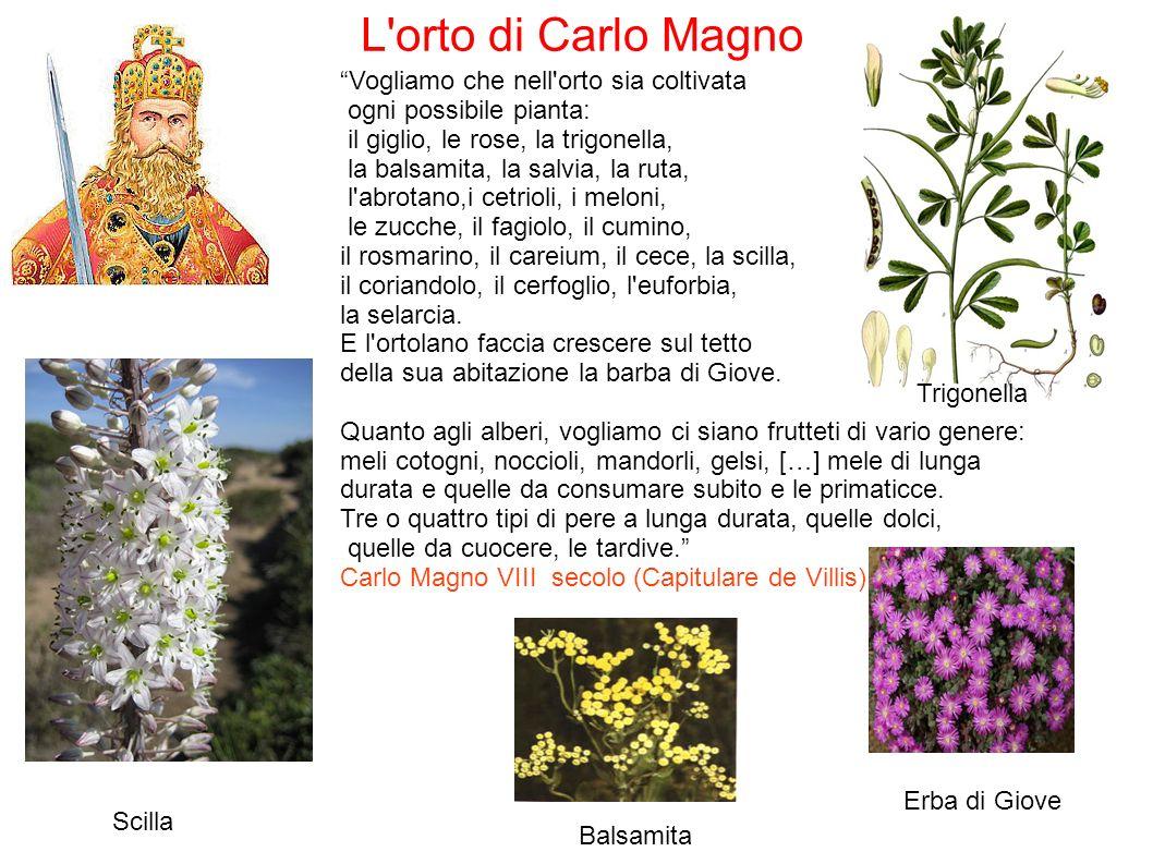 Vogliamo che nell orto sia coltivata ogni possibile pianta: il giglio, le rose, la trigonella, la balsamita, la salvia, la ruta, l abrotano,i cetrioli, i meloni, le zucche, il fagiolo, il cumino, il rosmarino, il careium, il cece, la scilla, il coriandolo, il cerfoglio, l euforbia, la selarcia.