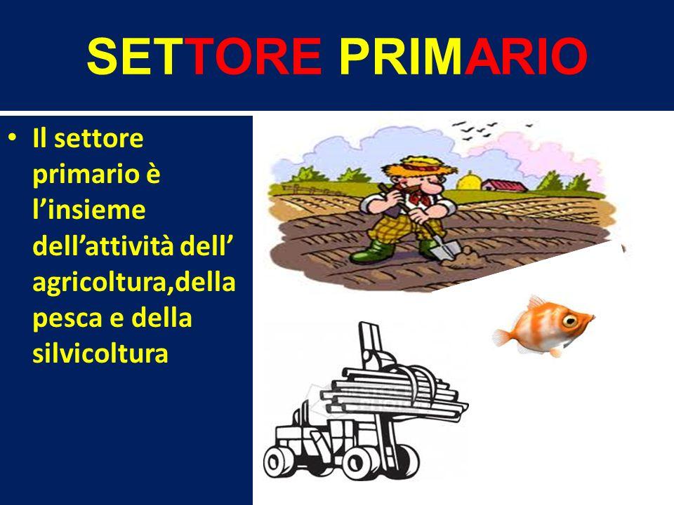 SETTORE PRIMARIO Il settore primario è linsieme dellattività dell agricoltura,della pesca e della silvicoltura