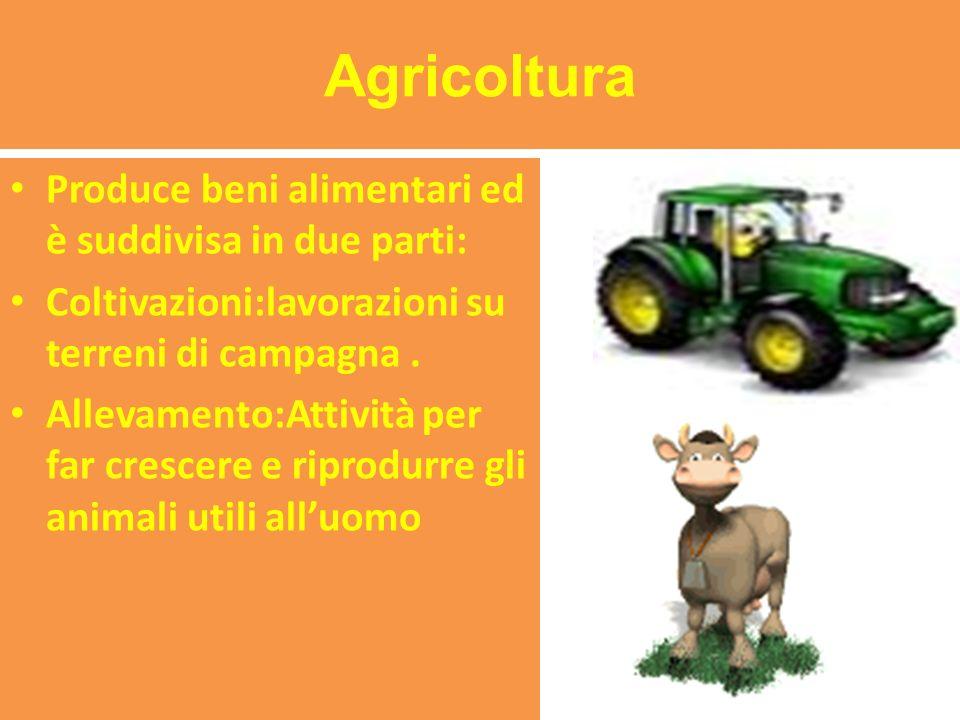 Agricoltura Produce beni alimentari ed è suddivisa in due parti: Coltivazioni:lavorazioni su terreni di campagna.