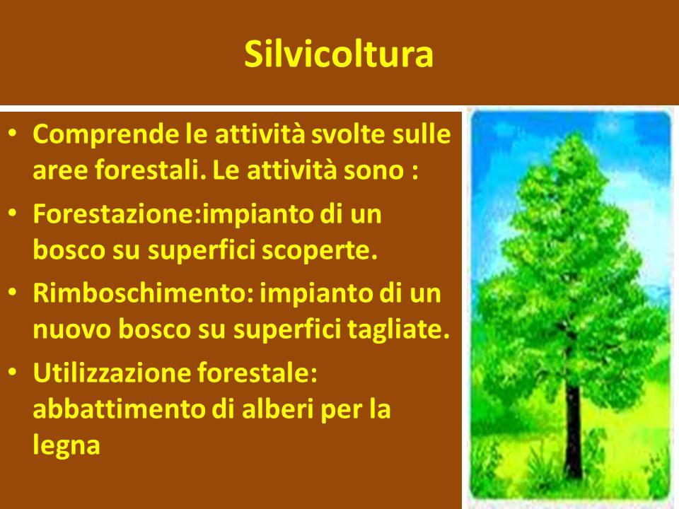 Silvicoltura Comprende le attività svolte sulle aree forestali.