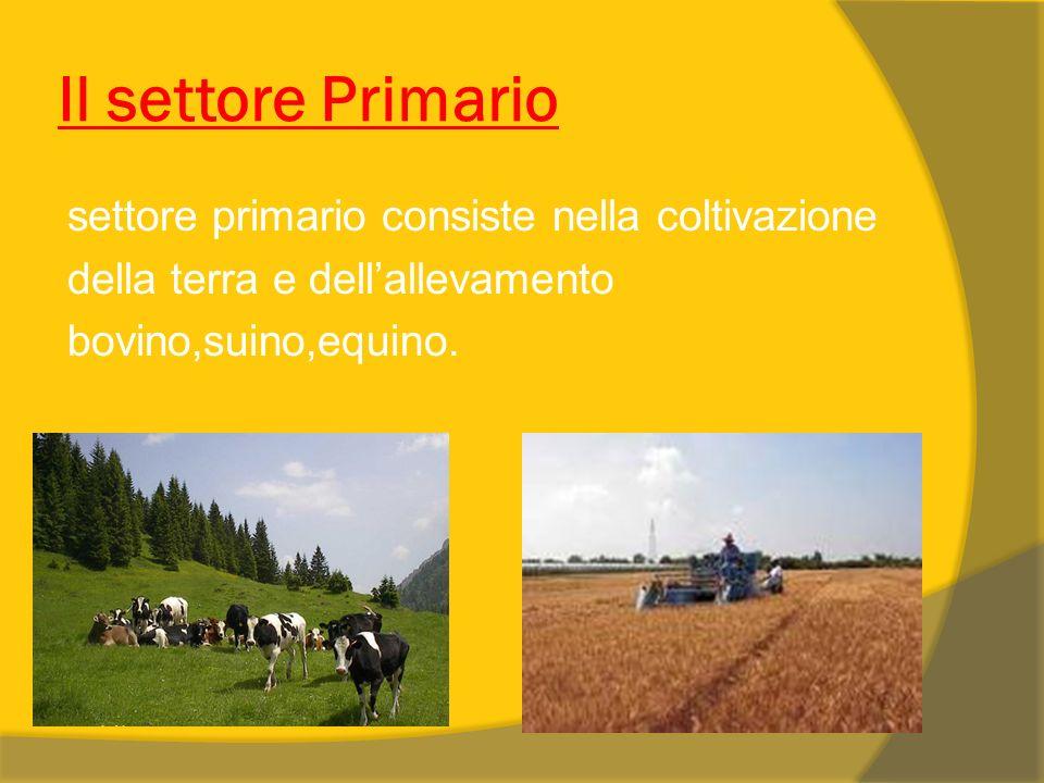 Il settore Primario settore primario consiste nella coltivazione della terra e dellallevamento bovino,suino,equino.