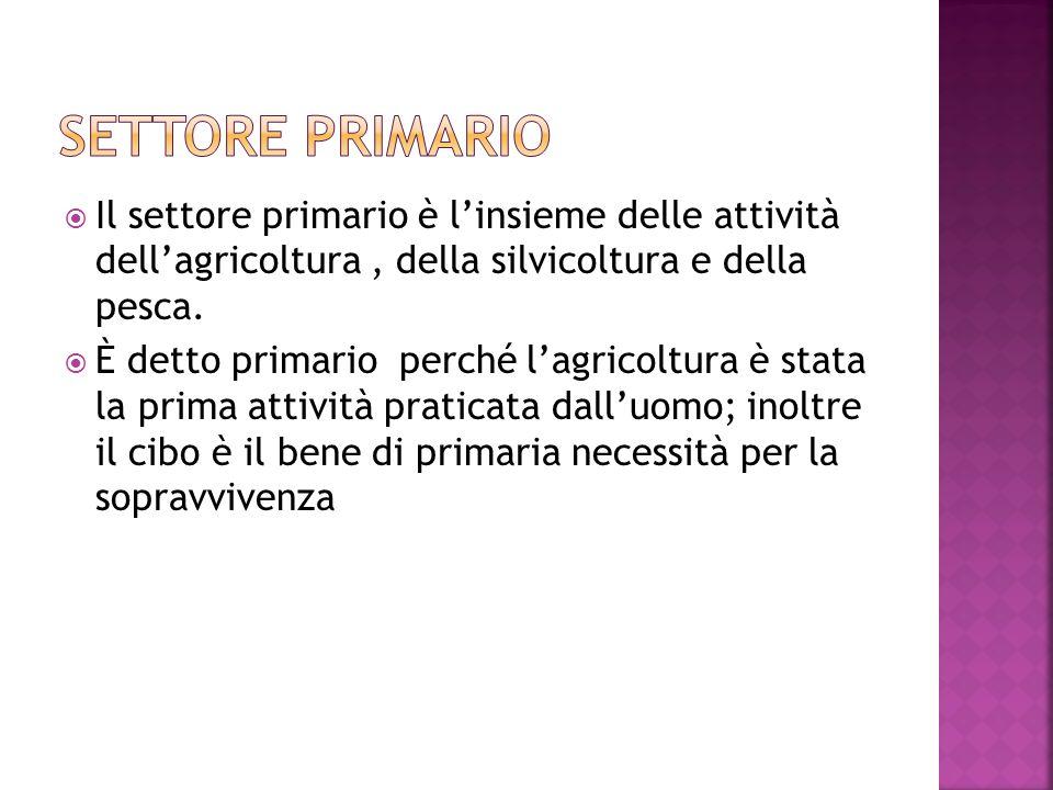 Il settore primario è linsieme delle attività dellagricoltura, della silvicoltura e della pesca.