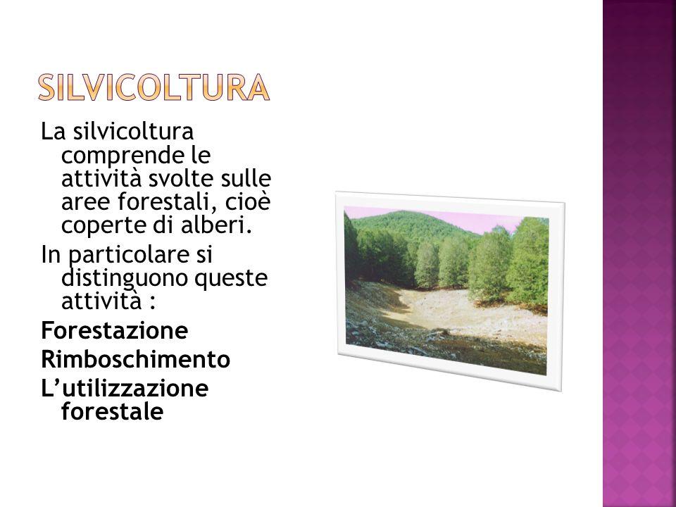 La silvicoltura comprende le attività svolte sulle aree forestali, cioè coperte di alberi.