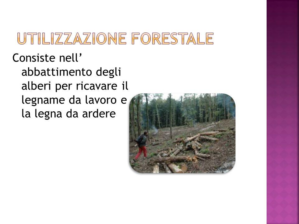 Consiste nell abbattimento degli alberi per ricavare il legname da lavoro e la legna da ardere