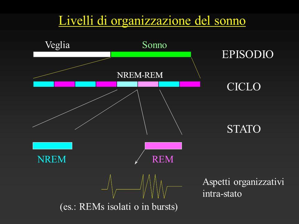 Livelli di organizzazione del sonno EPISODIO CICLO STATO Aspetti organizzativi intra-stato VegliaSonno NREMREM NREM-REM (es.: REMs isolati o in bursts