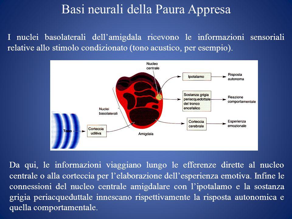 Basi neurali della Paura Appresa I nuclei basolaterali dellamigdala ricevono le informazioni sensoriali relative allo stimolo condizionato (tono acust