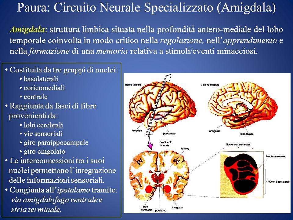 Paura: Circuito Neurale Specializzato (Amigdala) Amigdala: struttura limbica situata nella profondità antero-mediale del lobo temporale coinvolta in m