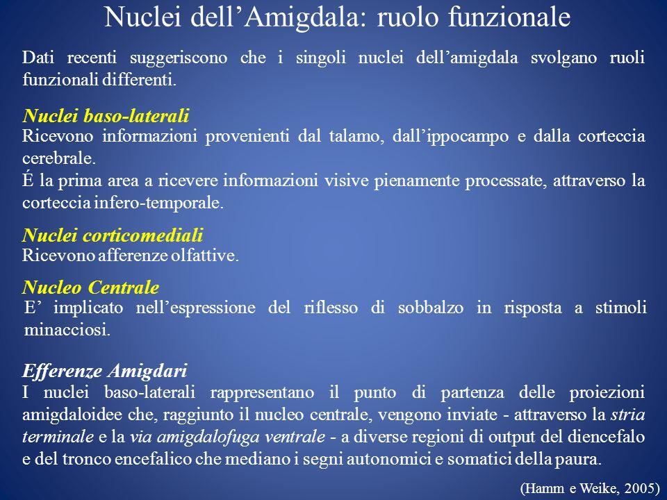 Nuclei dellAmigdala: ruolo funzionale Dati recenti suggeriscono che i singoli nuclei dellamigdala svolgano ruoli funzionali differenti. Ricevono infor