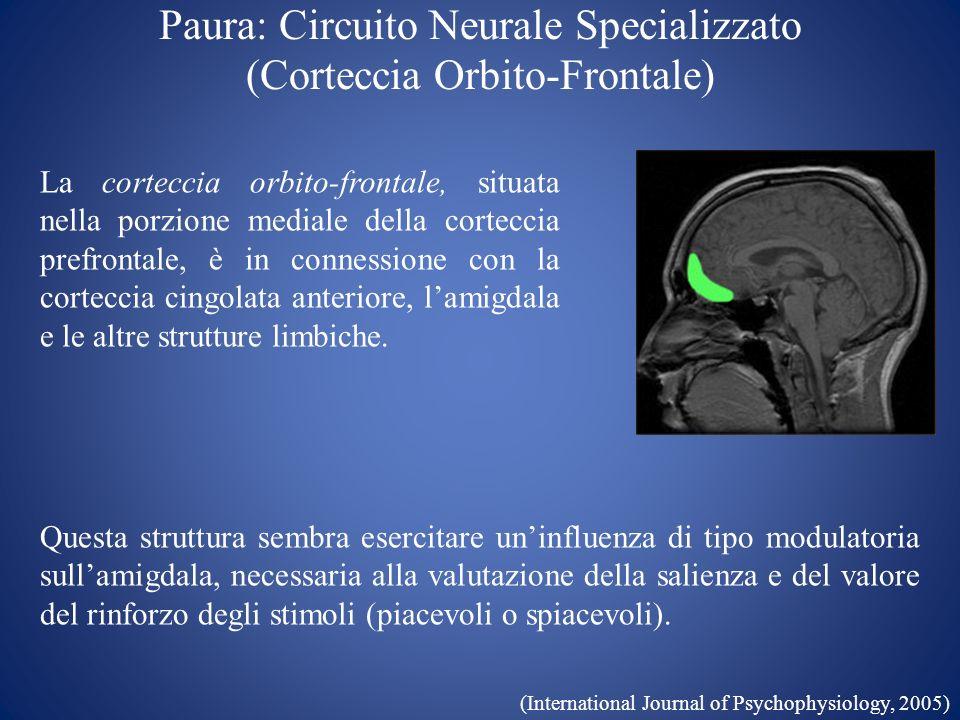 Paura: Circuito Neurale Specializzato (Corteccia Orbito-Frontale) La corteccia orbito-frontale, situata nella porzione mediale della corteccia prefron