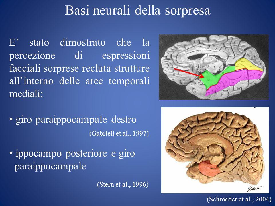 Basi neurali della sorpresa E stato dimostrato che la percezione di espressioni facciali sorprese recluta strutture allinterno delle aree temporali me