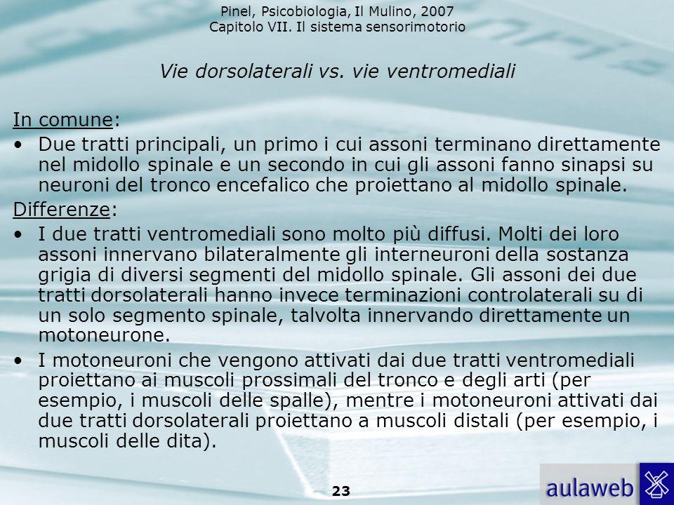 Pinel, Psicobiologia, Il Mulino, 2007 Capitolo VII. Il sistema sensorimotorio 23 Vie dorsolaterali vs. vie ventromediali In comune: Due tratti princip