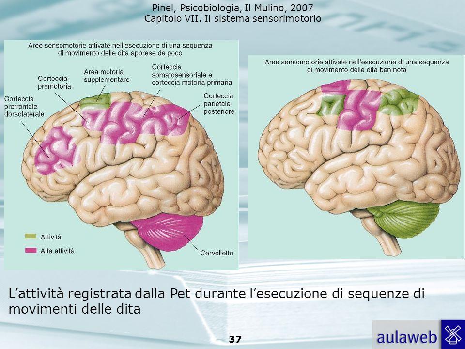 Pinel, Psicobiologia, Il Mulino, 2007 Capitolo VII. Il sistema sensorimotorio 37 Lattività registrata dalla Pet durante lesecuzione di sequenze di mov