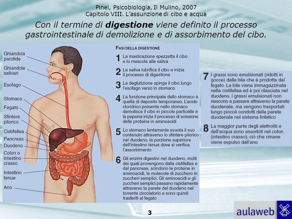 Pinel, Psicobiologia, Il Mulino, 2007 Capitolo VIII. Lassunzione di cibo e acqua 3 Con il termine di digestione viene definito il processo gastrointes