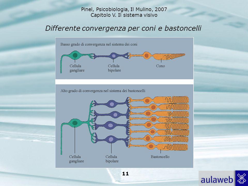 Pinel, Psicobiologia, Il Mulino, 2007 Capitolo V. Il sistema visivo 11 Differente convergenza per coni e bastoncelli